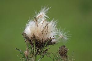 Comment les graines deviennent-elles des plantes ?