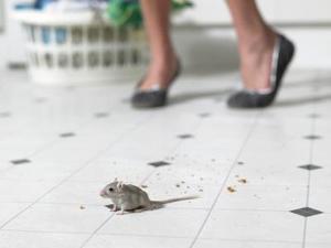 Comment faire pour contrôler la souris dans les murs vides