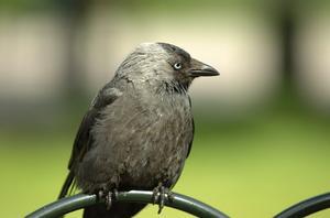 Comment sculpter des bains d'oiseaux Pierre