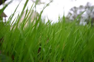 5 étapes de soin de pelouse Scotts