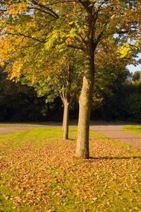 Les effets des Hormones végétales sur la croissance des plantes & développement