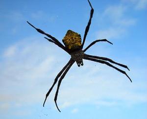 Comment faire votre propre jet agrume pour repousser les araignées