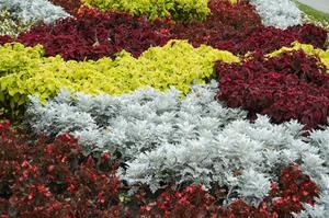 BRICOLAGE jardin de lit surélevé