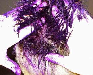 Comment faire pour teindre les cheveux de l'enfant avec Jell-o ou Kool-Aid pour Halloween