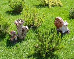 Maladies de pelouse gazon