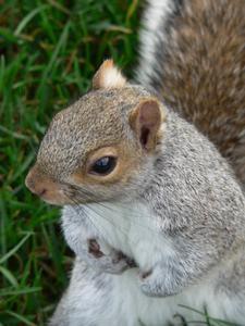 Élevage de bébés écureuils