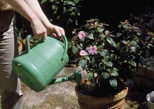 L'eau salée & plantes