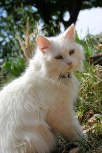 Respiration rapide du chat