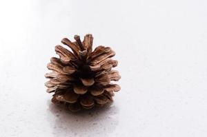 comment faire pousser des graines de pin. Black Bedroom Furniture Sets. Home Design Ideas