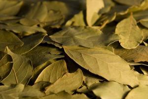 Comment faire sécher les feuilles de Laurier frais