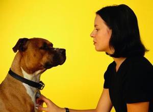 Comment faire un conditionneur de flocons d'avoine pour chiens
