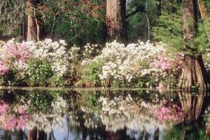 Comment faire la différence entre un arbre de Magnolia & Bush