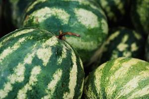 Faire pousser du melon a la vertical - Comment faire murir un melon ...