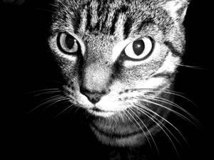 Taux de sodium chez les chats