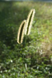 Comment identifier la mauvaise herbe de la pelouse - Identifier mauvaise herbe gazon ...