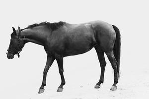 Cures d'EPM chez le cheval
