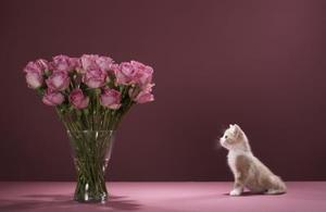 les meilleurs hydrolats pour tuer les puces sur les chats. Black Bedroom Furniture Sets. Home Design Ideas