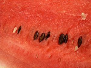 Comment récolter les graines de pastèque