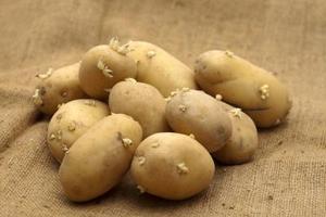 Comment Planter Des Pommes De Terre Dans Des Sacs Ordures