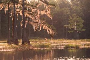 Comment faire un réseau trophique pour habitat de marais en ligne