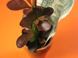Ce que les plantes à usage pour le paysage des affaires
