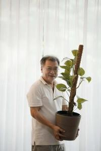Plantes grimpantes d'intérieur