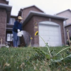 Pelouse javel - Comment tuer les mauvaises herbes ...