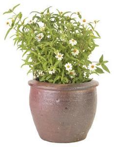 plantes faut il des pots avec des trous dans le fond condexatedenbay