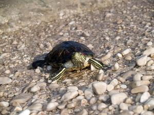 Comment mettre en place un aquarium de tortue d'eau avec poissons