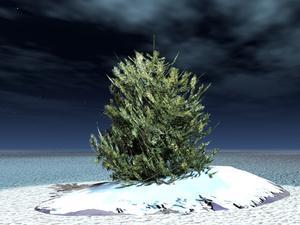 Instructions pour Colorado artificiel arbres de l'épinette