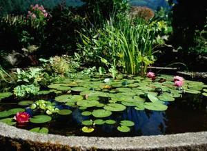 L'utilisation de Bentonite dans les étangs de l'argile