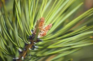Le meilleurs des arbres d'intérieur & plantes