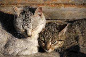 Comment faire pour dissuader les chats avec spray au poivre
