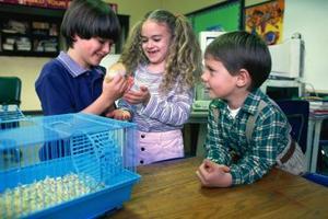 Comment garder des hamsters