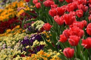Ce que les fleurs à planter dans un grand lit surélevé pour peu d'entretien
