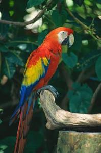 Espèces et Types de perroquets