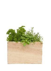 Jardins d'herbes contenant