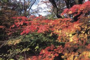 Arbres d'automne Blaze & élagage
