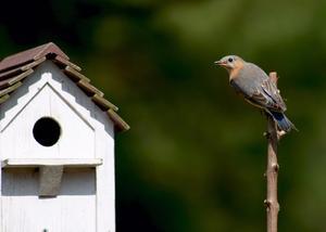Dans quelle mesure part bluebird maisons convient ?