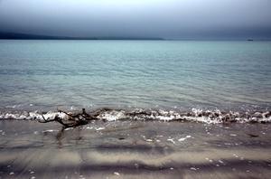 Verre de mer & Sculptures de bois flotté