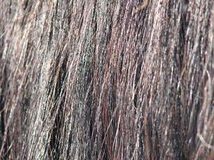 Comment faire pour promouvoir la croissance des cheveux sur les chevaux