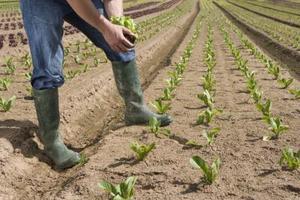 Quand les plantes ont besoin d 39 tre prot g du gel au - Quand planter les poivrons ...