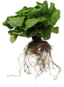Comment faire votre propre Kit de plantes hydroponiques