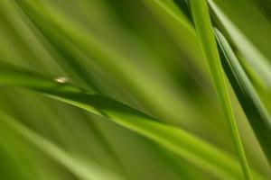Comment identifier les nématodes et les larves de jardin