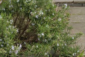Plantes & fleurs qui repoussent les moustiques