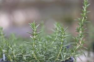 Comment planifier l'aménagement de votre jardin d'herbes aromatiques