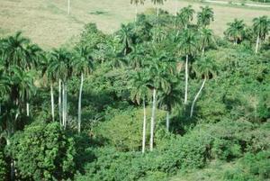 Quels sont les facteurs Influence la biodiversité d'un écosystème ?