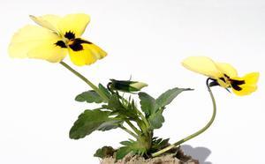 Effets de lumières colorées sur la croissance des plantes