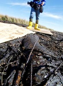 Que se passe-t-il à l'huile de l'océan déversements ?
