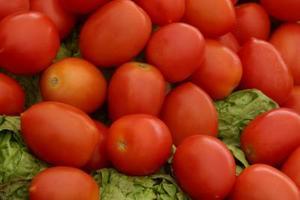 Types de tomates pour la Sauce